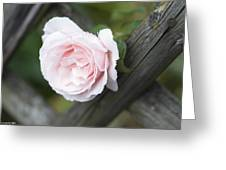 Flower Among The Fence Greeting Card
