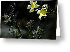 Flower Among The Moss Greeting Card