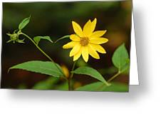 Flower And Bud Greeting Card