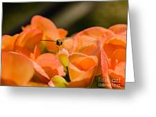 Flower And Ready To Fly Greeting Card