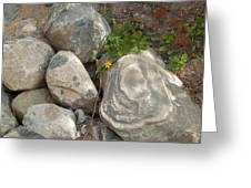 Flower And Rocks Greeting Card