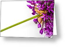 Flower At Rest Greeting Card