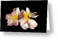 Flower Azalea. Greeting Card