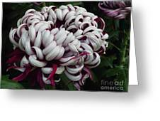 Flower Basket With Purple Texture Greeting Card