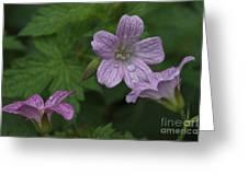 Flower Bath Greeting Card