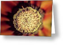 Flower Beauty Iv Greeting Card by Marco Oliveira