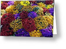 Flower Bed Across The Street From The Grand Palais Off Of Champs Elysees  Greeting Card