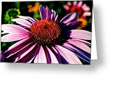 Flower Bed Close Up Greeting Card