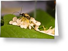 Flower Beetle Greeting Card