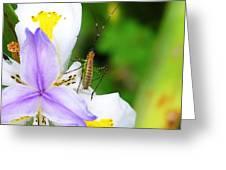 Flower Bug - I Greeting Card