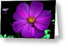 Flower Bug- Viator's Agonism Greeting Card by Vijinder Singh