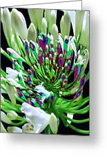 Flower Bunch Bush Sensual Exotic Valentine's Day Gifts Greeting Card