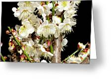 Flower Bunch Bush White Cream Strands Sensual Exotic Valentine's Day Gifts Greeting Card