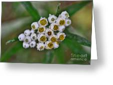 Flower Buttons Greeting Card