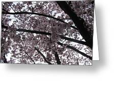 Flower Canopy And Sky Greeting Card