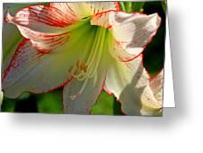 Flower Child Amaryllis Flower Art Greeting Card
