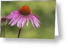 Flower Close Up At Michigan State University Greeting Card