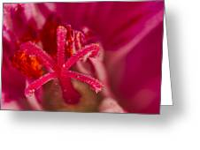 Flower Close Up II Greeting Card
