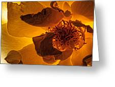 Flower Close Up IIi Greeting Card