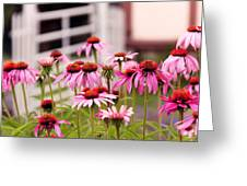 Flower - Cone Flower - In An English Garden  Greeting Card