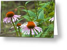 Flower - Cone Flower- Luther Fine Art Greeting Card