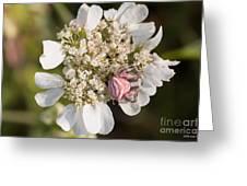 Flower Crab Spider Greeting Card