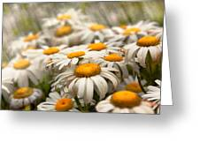 Flower - Daisy - Not Quite Fresh As A Daisy Greeting Card