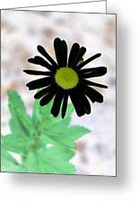 Flower - Daisy - Photopower 327 Greeting Card