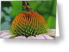 Flower Feeding Greeting Card