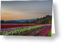 Flower Fields 2 Cropped Into A Standard Ratio Greeting Card