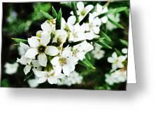 Flower Filled Dreams Greeting Card