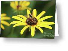 Flower Fly And Yellow Flowers Greeting Card