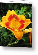 Flower Garden 05 Greeting Card