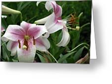 Flower Garden 20 Greeting Card