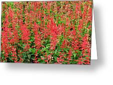 Flower Garden 34 Greeting Card