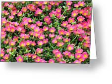 Flower Garden 36 Greeting Card