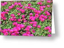 Flower Garden 38 Greeting Card