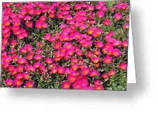 Flower Garden 39 Greeting Card