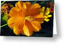 Flower Garden 43 Greeting Card