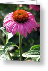 Flower Garden 48 Greeting Card