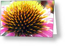 Flower Garden 49 Greeting Card