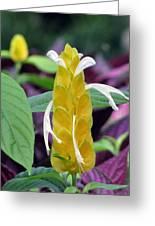 Flower Garden 52 Greeting Card