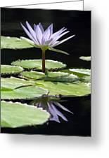 Flower Garden 62 Greeting Card