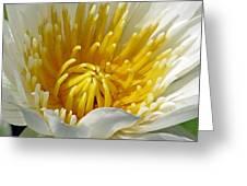 Flower Garden 68 Greeting Card
