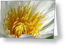 Flower Garden 69 Greeting Card