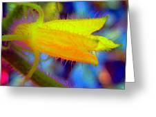 Flower - Garden - Cucumber Greeting Card