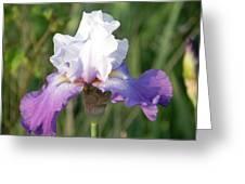 Flower Garden Iris Blooming Greeting Card