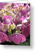 Flower-hydrangea Pink Greeting Card