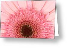 Flower - I Love Pink Greeting Card