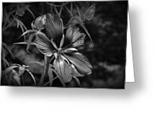Flower In B-w Greeting Card